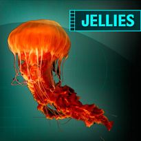 I Completed the Jellies Mission at the Aquarium of the Pacific