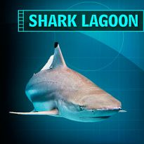 I Completed the Shark Lagoon Mission at the Aquarium of the Pacific