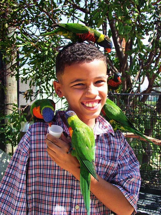 child with many lorikeets on him - lightbox