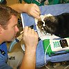 Animal Care: Hospital 101