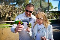 two people with lorikeets on their hands - thumbnail