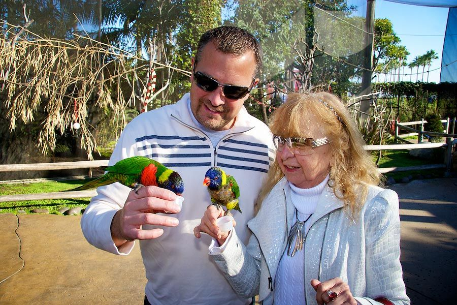 two people with lorikeets on their hands - lightbox