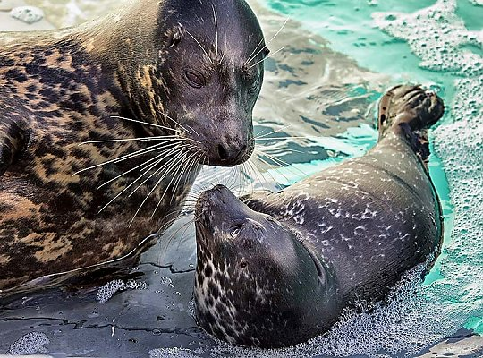 Seal and pup - slideshow