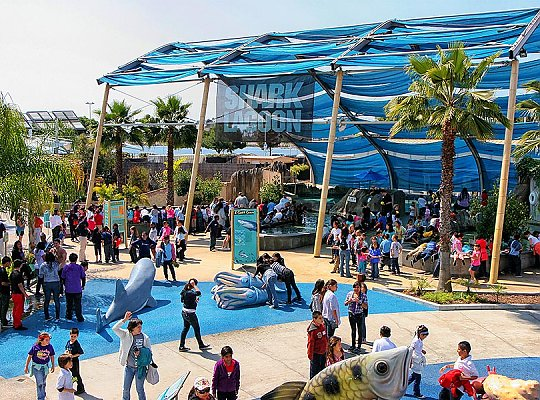 Shark Lagoon exhibit filled with people - slideshow