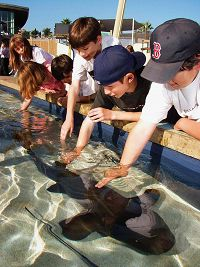 children touching shark in a shallow tank - thumbnail