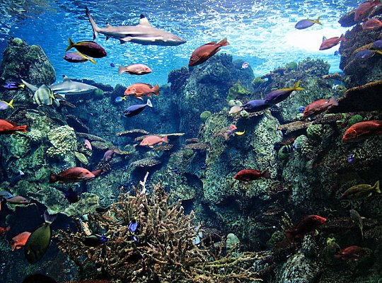 Many colored fish and shark in a tank - slideshow
