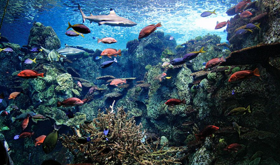 Aquarium of the pacific exhibits tropical pacific gallery for Reef tropical fish