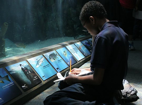 boy kneeling with notebook in the tropical tunnel writing or drawing the fish he sees - slideshow