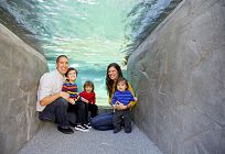 Family under the penguin exhibit alcove