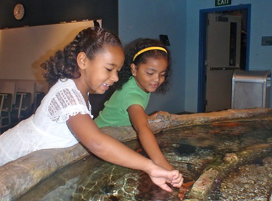 two girls using the 'two finger touch' method to touch a sea star - slideshow