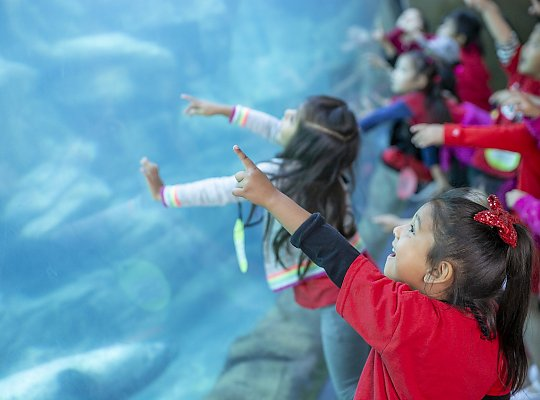 girl pointing to seals and sea lions in the tunnel - slideshow