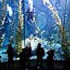 Blue Cavern Dive Show
