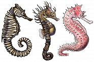 Seahorse and Seadragon Illustrations Now on Display