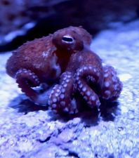 What's New at the Aquarium This Spring