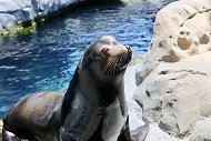 Send a Personal Greeting from a Seal or Sea Lion with Cameo
