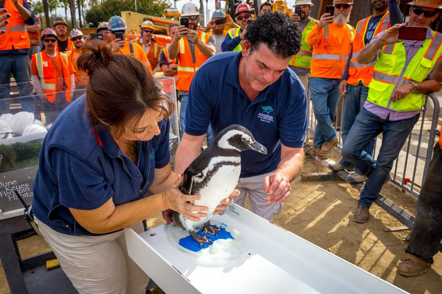 Penguin Signs Beam with Help From Aquarium Staff - lightbox
