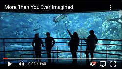 Youtube thumbnail More Than You Ever Imagined person pointing at exhibit