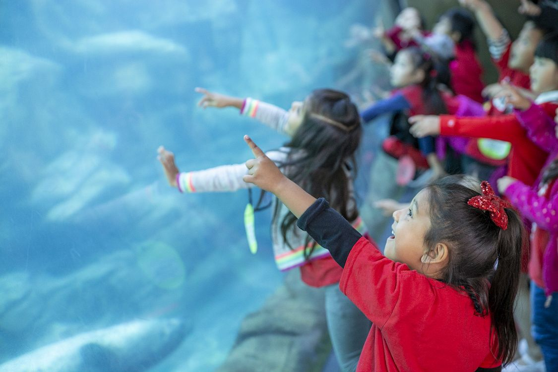 Young girl looking and pointing at Aquarium exhibit - lightbox