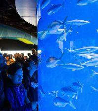 Things to See and Do at the Aquarium This Summer