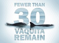 Aquarium Joins 1 Million Cards Campaign to Help Save the Vaquita Porpoise from Extinction
