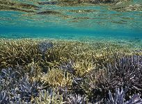 Can We Save Coral Reefs?
