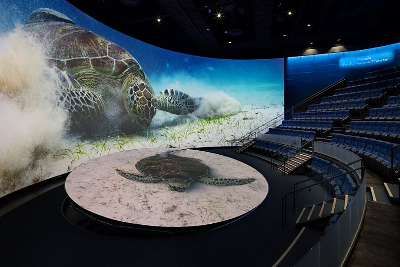 Pacific Visions Theater with Turtle - slideshow