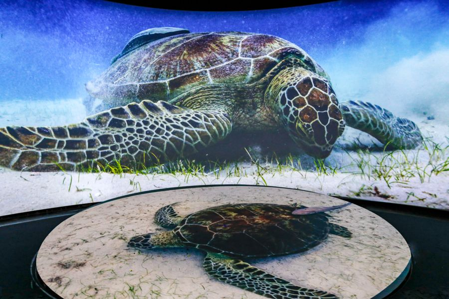Sea Turtle on Sea Floor Eating Theater Still - lightbox