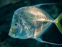 Sideview of large fish