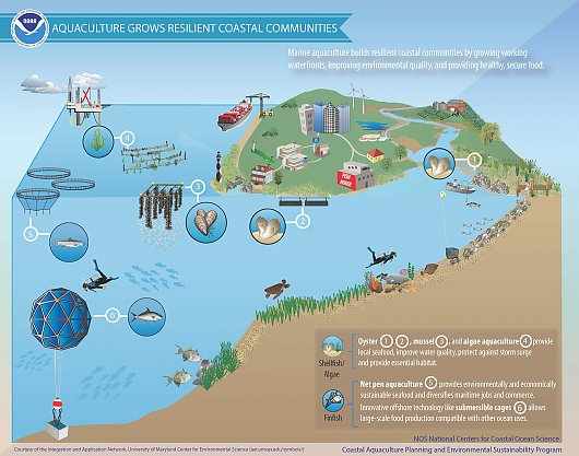 Graphic: Aquaculture grows resilient coastal communities - popup