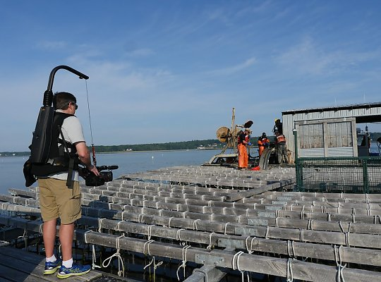 Aquarium camera operator with camera harness on a mussel raft, filming a mussel harvest. - slideshow