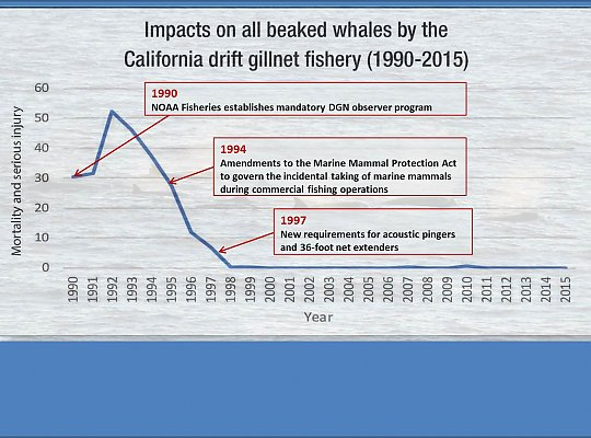 Graph of beaked whale impacts - slideshow
