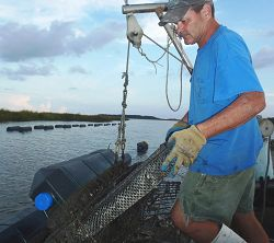 Farmer Frank Roberts tends to his oyster farm in South Carolina.
