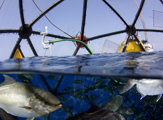 Aquarium of the Pacific | Seafood for the Future | Marine