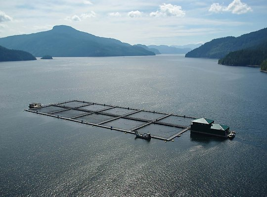 Overhead view of aquaculture farm - slideshow