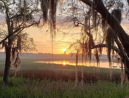 Beautiful sunrise over South Carolina wetland with oaks and Spanish moss in foreground. 900x600