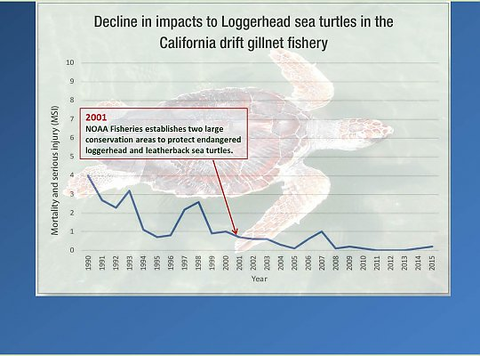 Graph of Loggerhead turtle impacts annotated - slideshow