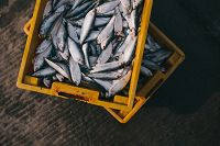 /images/seafoodfuture/fish-984299_640.jpg