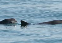 Seafood and the Vaquita: A Tragic History and Hopeful Future