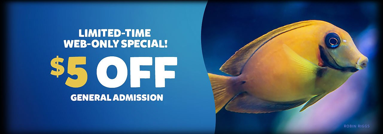 Limited-Time Web-Only Special $5 off general admission - banner