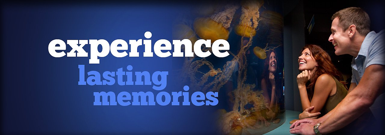 Experience Lasting Memories at the Aquarium - banner