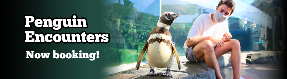 Learn about and meet a penguin up-close - banner