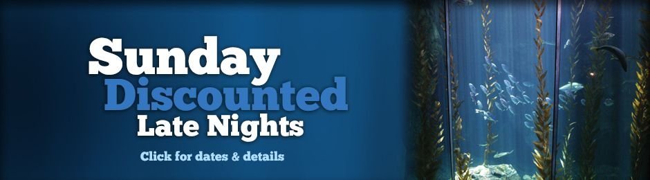 Sunday Discounted Late Nights Click for Dates & Details - banner