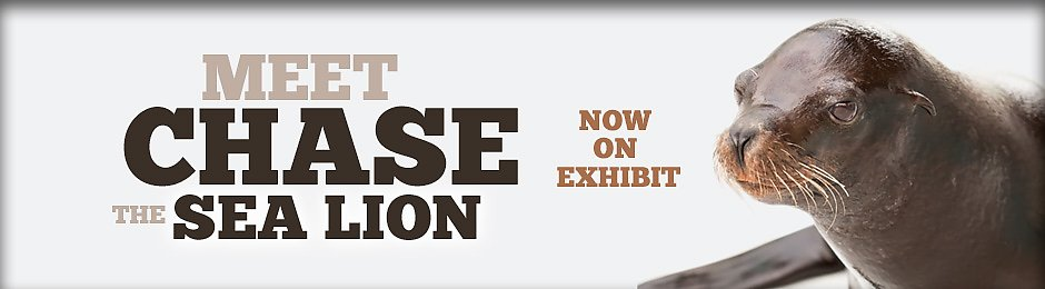 Chase the Sea Lion Now On Exhibit - banner