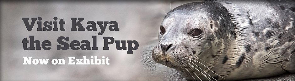 Visit Kaya the Seal Pup Now On Exhibit - banner