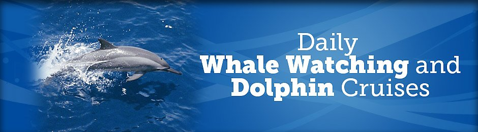 Whale watch and dolphin cruises daily - banner