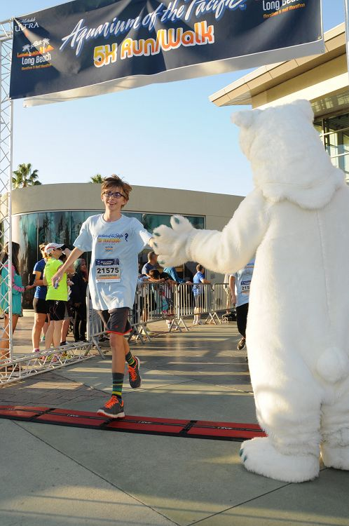 Aquarium polar bear mascot high-fiving a 5k runner as they finish the race - lightbox