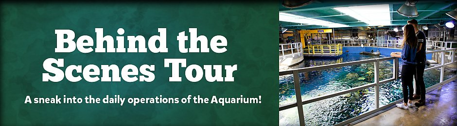 See the Aquarium behind the scenes on this special tour - banner