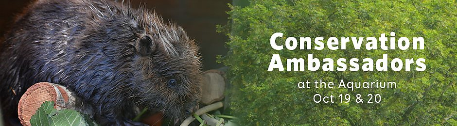 Conservation Ambassadors at the Aquarium on October 19 and 20 - banner