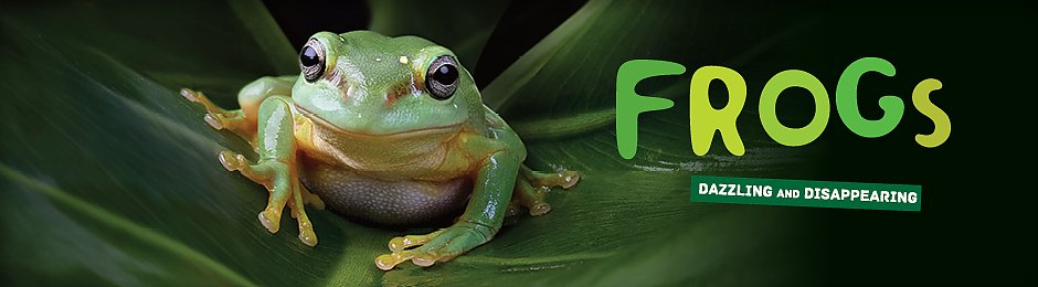 Frogs exhibit now on show - banner