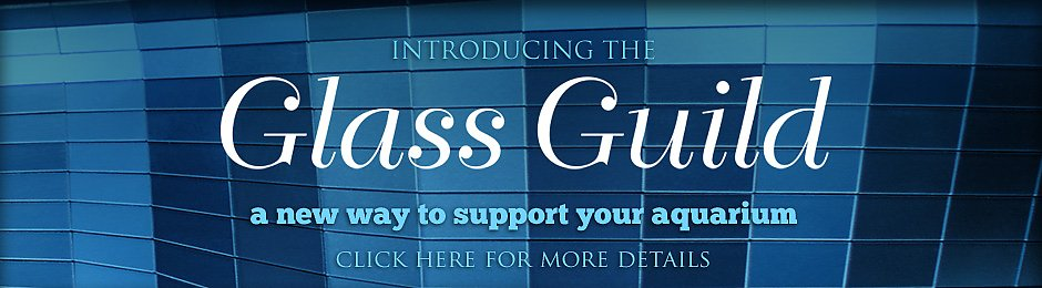 Introducing the Glass Guild a new way to support the Aquarium - banner